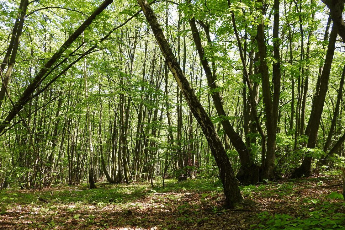 see the tree in the woods - github notifications and google mail
